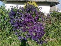 kvetmi ozdobený plot
