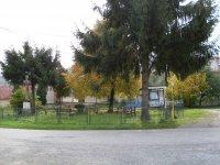 výrub smrekov v parku