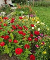 záplava kvetov pred domom