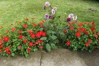 krása v záhradkách