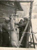 zabíjačka u mlynára - rok 1964