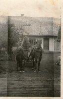 kone boli veľkou pomocou v gazdovstve