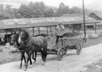 neoddeliteľnou súčasťou družstva boli aj kone, napríklad, aj pri zvoze sena