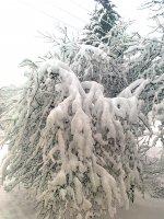 zimná krása 7.2.2013
